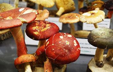 Mushroom Museum Zagreb